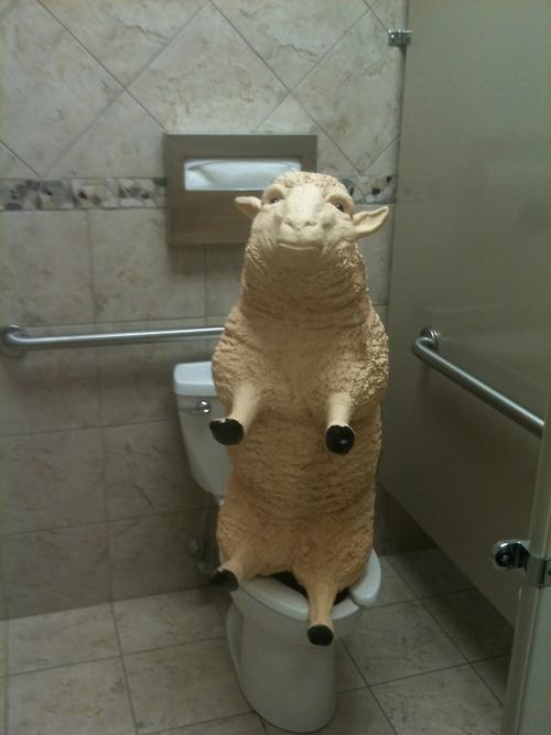 baaa,bathroom,toilet