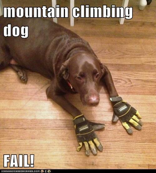 mountain climbing dog  FAIL!