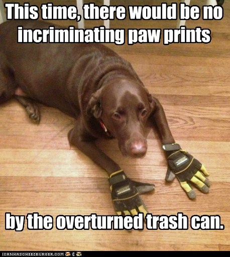 This time, there would be no incriminating paw prints
