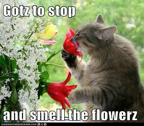 Gotz to stop  and smell the flowerz