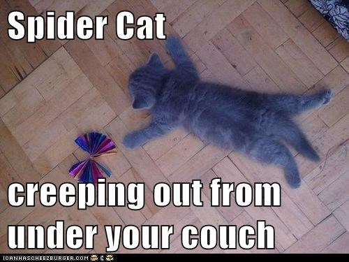 Spider Cat  creeping out from under your couch
