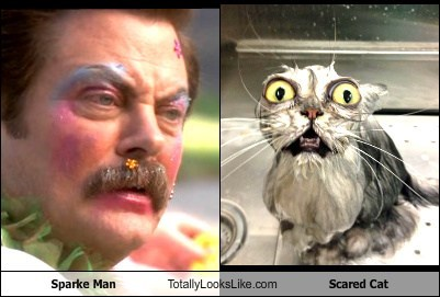 Sparke Man Totally Looks Like Scared Cat