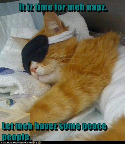 It iz time for meh napz.  Let meh havez some peace people.