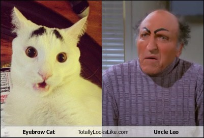 eyebrows,TLL,sam the cat with eyebrows,seinfeld,uncle leo