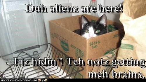 Duh alienz are here!  I iz hidin'! Teh notz getting meh brains.
