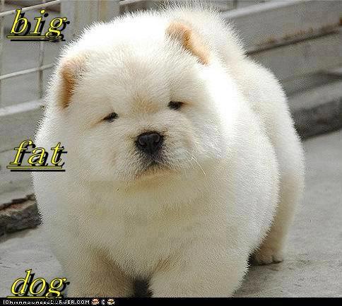 big fat dog