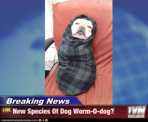 Breaking News - New Species Of Dog Worm-O-dog?