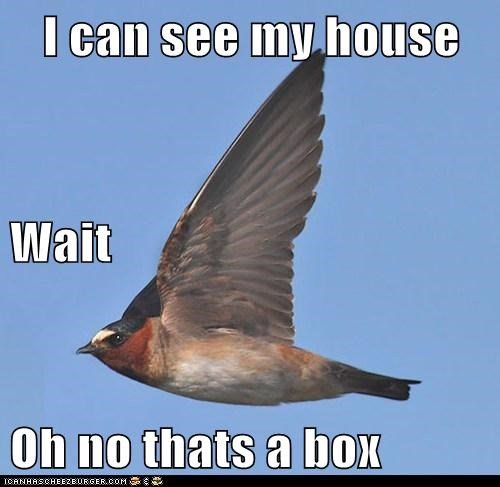 I can see my house Wait Oh no thats a box