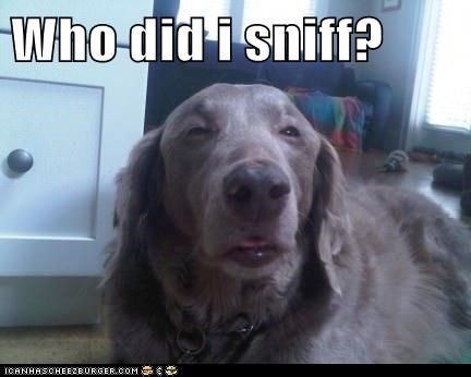 Who did i sniff?