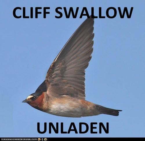CLIFF SWALLOW  UNLADEN