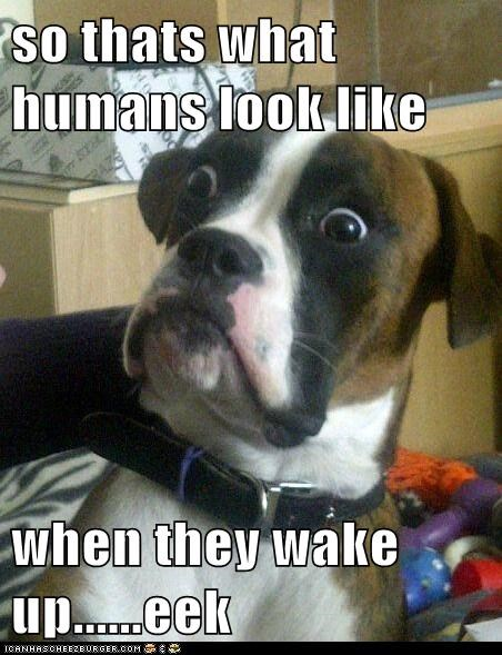 so thats what humans look like  when they wake up......eek