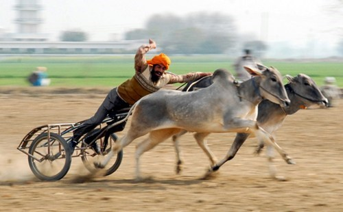WINning at the India Rural Olympics