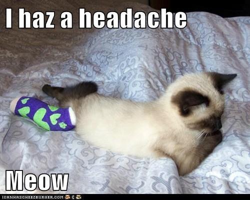 I haz a headache  Meow