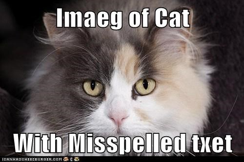 Imaeg of Cat  With Misspelled txet