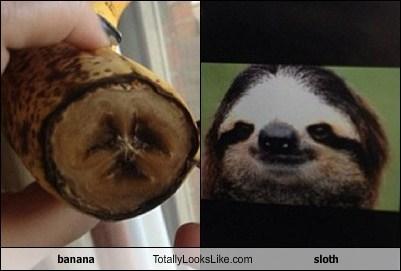 banana,TLL,sloth