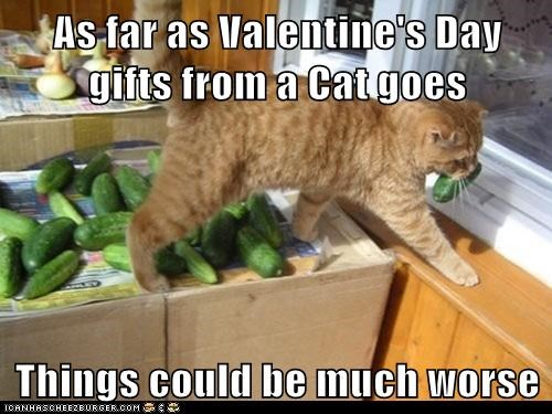 As far as Valentine's Day gifts from a Cat goes  Things could be much worse