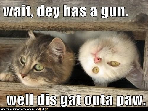 wait, dey has a gun.  well dis gat outa paw.