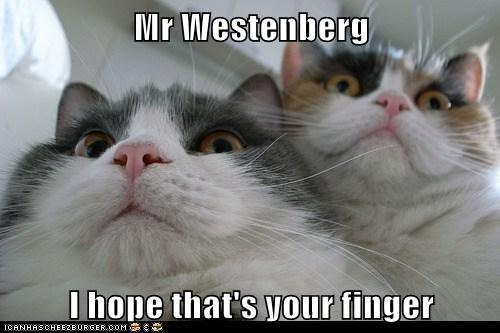 Mr Westenberg  I hope that's your finger