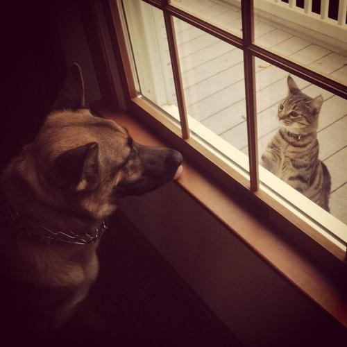door,dogs,interspecies,friends,goggies r owr friends,Cats