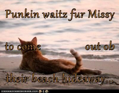 Punkin waitz fur Missy to come               out ob their beach hideaway...
