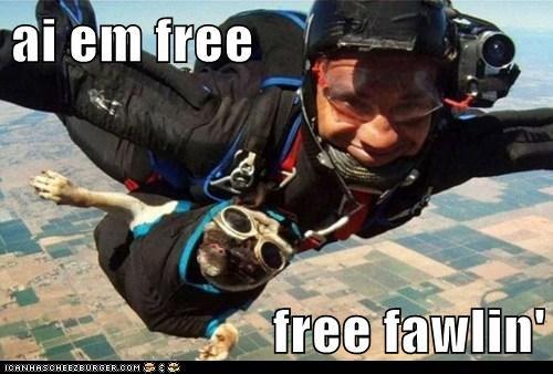 ai em free  free fawlin'