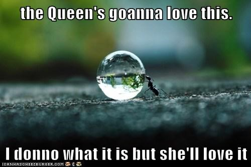 excited,queen,water,drop,ants