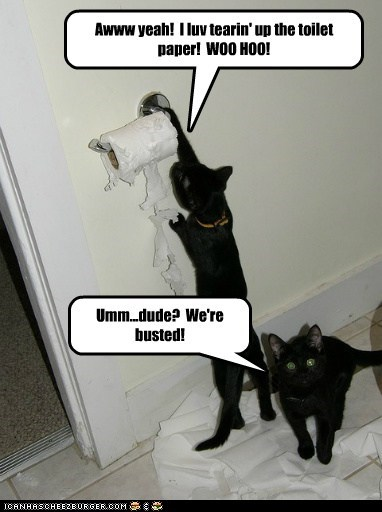 Awww yeah!  I luv tearin' up the toilet paper!  WOO HOO!