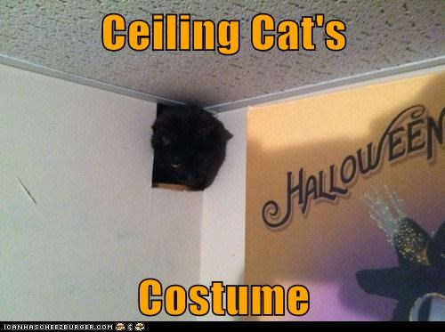 Ceiling Cat's  Costume