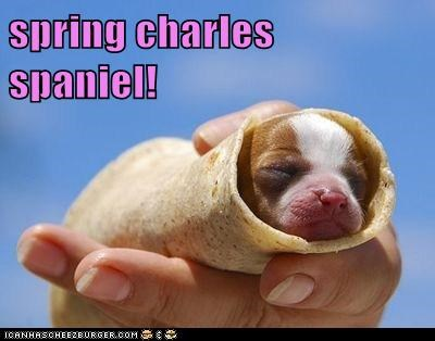 spring charles spaniel!