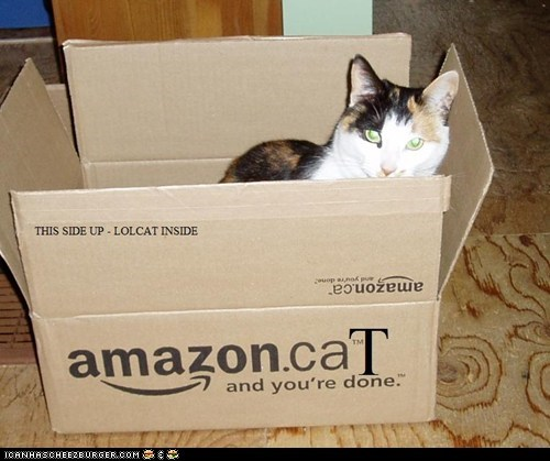 You Qualify for Supersaver Shipping of Your LOL Cat
