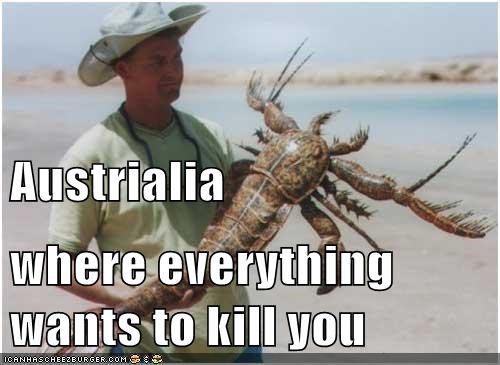 Austrialia where everything wants to kill you
