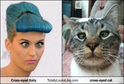 Cross-eyed Katy Totally Looks Like cross-eyed cat