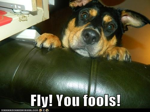dogs,Lord of the Rings,gandalf,what breed,fly you fools