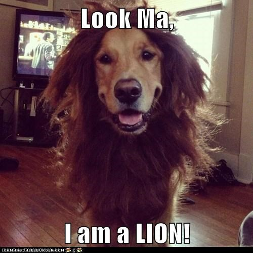 Look Ma,   I am a LION!