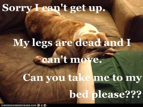 Sorry I can't get up. My legs are dead and I can't move. Can you take me to my bed please???