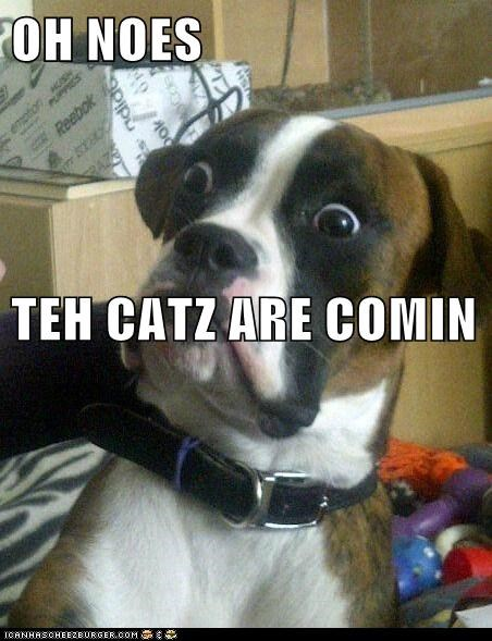 OH NOES TEH CATZ ARE COMIN
