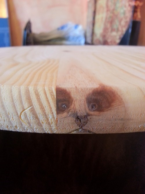 cat,table,wood
