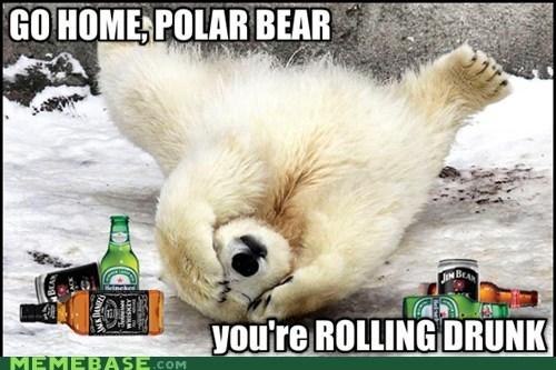 go home your drunk,rolling,polar bears,headaches
