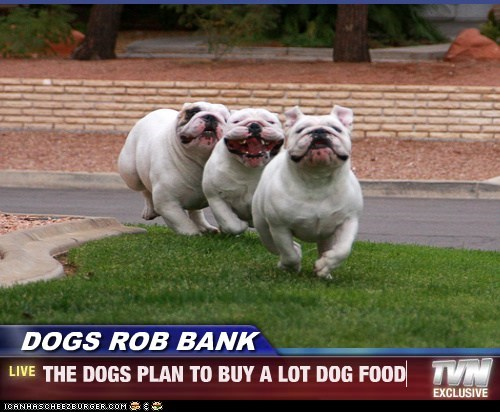DOGS ROB BANK - THE DOGS PLAN TO BUY A LOT DOG FOOD