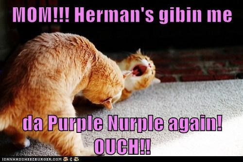 MOM!!! Herman's gibin me  da Purple Nurple again! OUCH!!