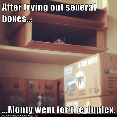After trying out several boxes...  ...Monty went for the duplex.