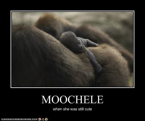 MOOCHELE