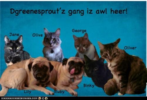 Da Gang'z Awl Heer