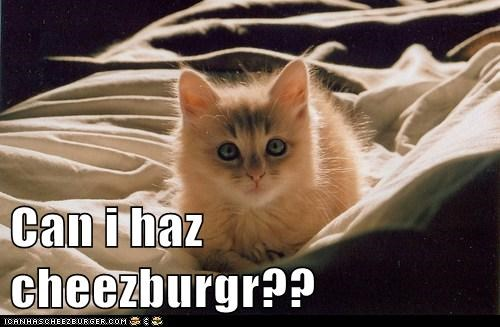Can i haz cheezburgr??