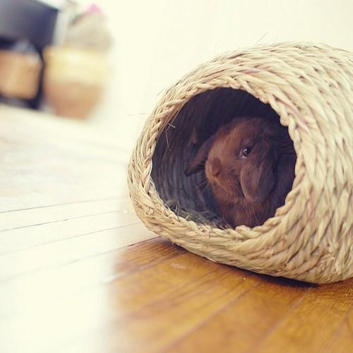 Bunday,hideaway,straw,rabbit,bunny,squee,basket