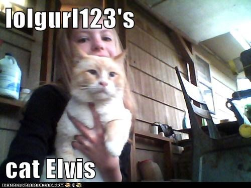 lolgurl123's  cat Elvis
