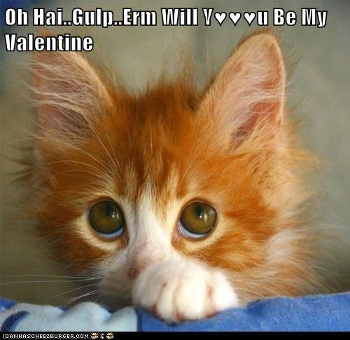 Oh Hai..Gulp..Erm Will Y♥♥♥u Be My Valentine