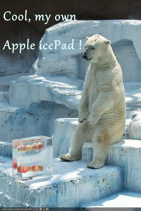 ipad,polar bears,frozen,apples