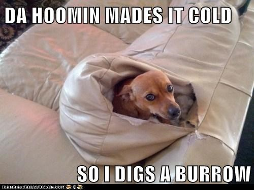 dogs,destroyed,cold,couch,hole,burrow,sofa