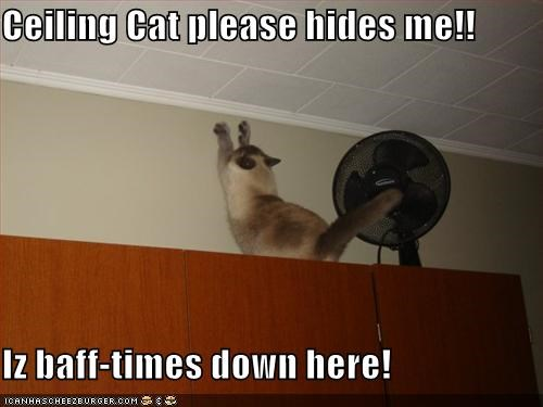 Ceiling Cat please hides me!!  Iz baff-times down here!